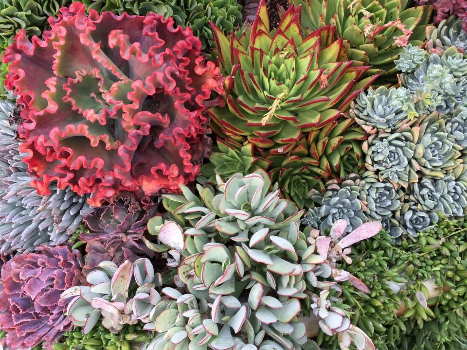 Succulent-collage