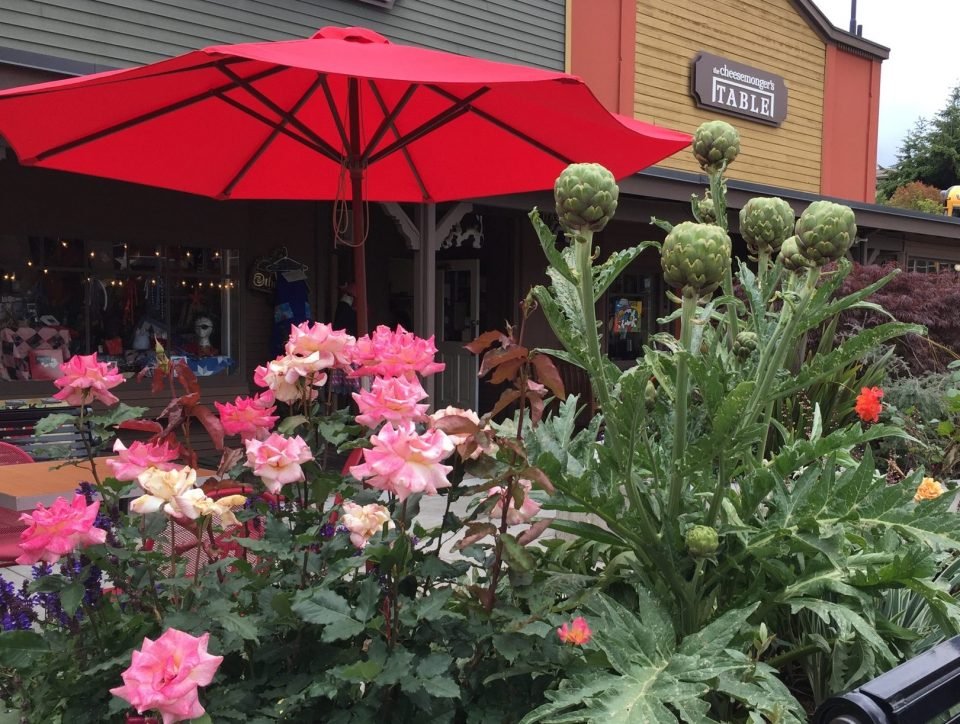 artichokes - roses horiz